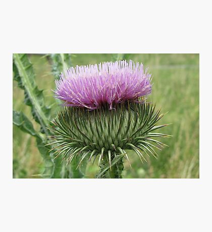 Spiny Photographic Print
