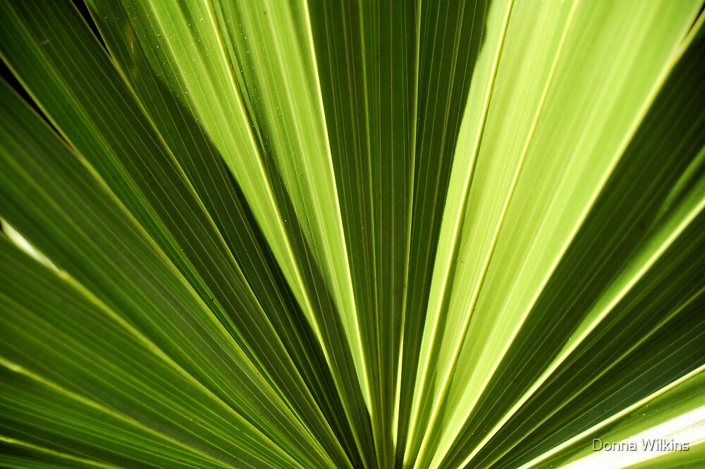 Lines in Green by Donna Adamski