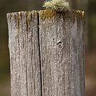Post & Lichen by Kathi Huff