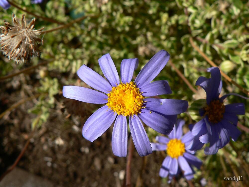 Flowers by sandy11