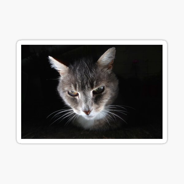 Portrait of tabby cat Sticker