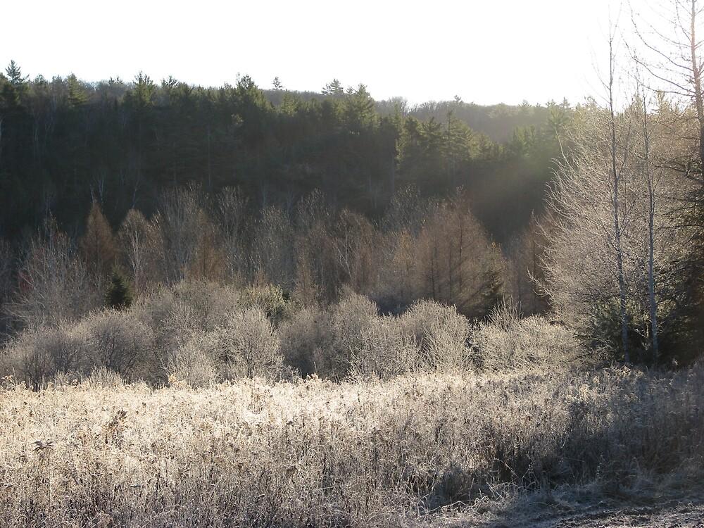 Frosty Morning by JohnEvans