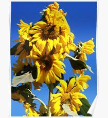 Sunflower Tower Poster