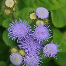 Purple Coral by saharabelle