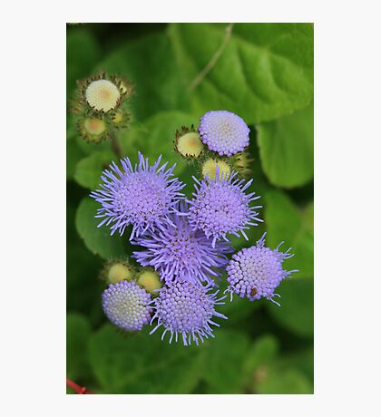 Purple Coral Photographic Print