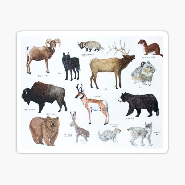 Mammals of Yellowstone National Park Sticker