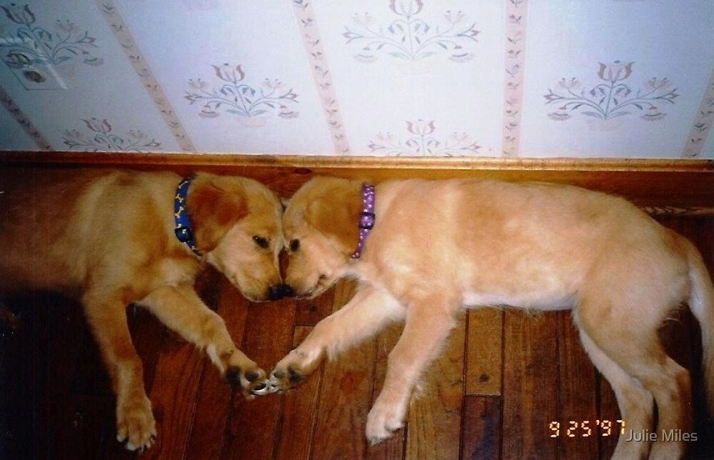Puppy Love by Julie Miles