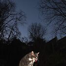 Tabby cat in garden at night by turniptowers