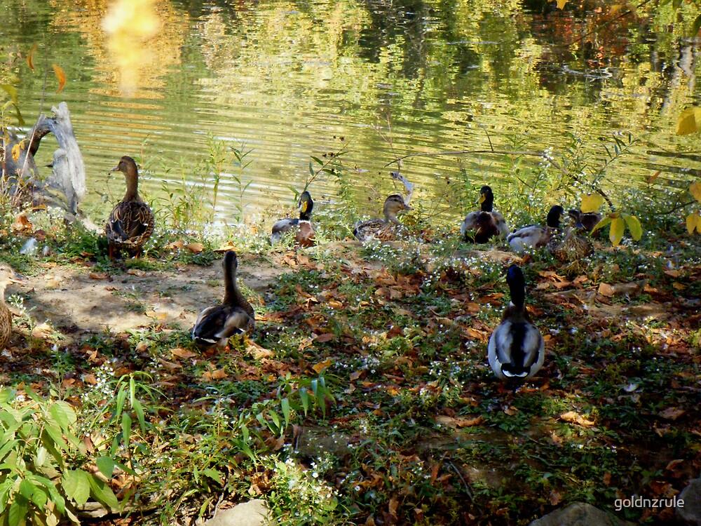 Blenko Ducks by goldnzrule