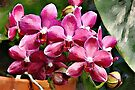 Red Phalaenopsis watercolour by PhotosByHealy