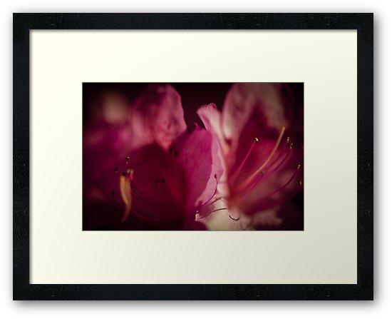 Flowerscapes - Purple Macro by lesslinear