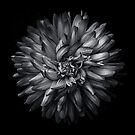 Backyard Flowers In Black And White 20 by Brian Carson