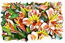 Peruvian Lily watercolour by PhotosByHealy