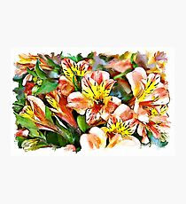 Peruvian Lily watercolour Photographic Print