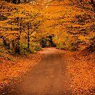 Leafy Lane 2 by JEZ22