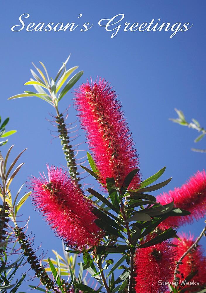 Banksia, Seasons Greetings by Steven Weeks