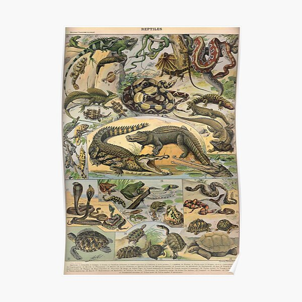 Reptiles illustrated Poster