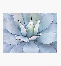 Agave cactus Photographic Print