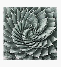 Silver Fractaloe Photographic Print