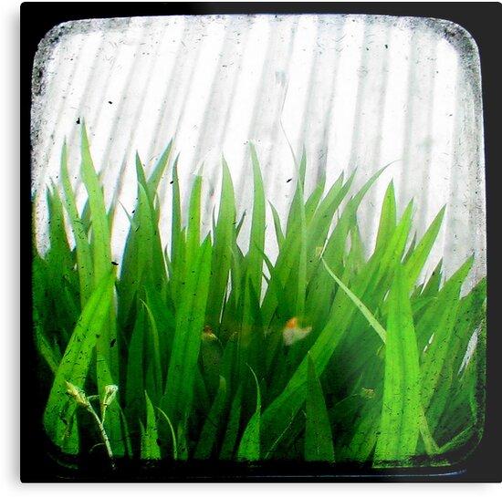 Green Green Grass by Kitsmumma