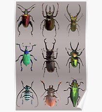 Beetles #1 Poster