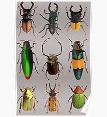 Beetles #2 Poster