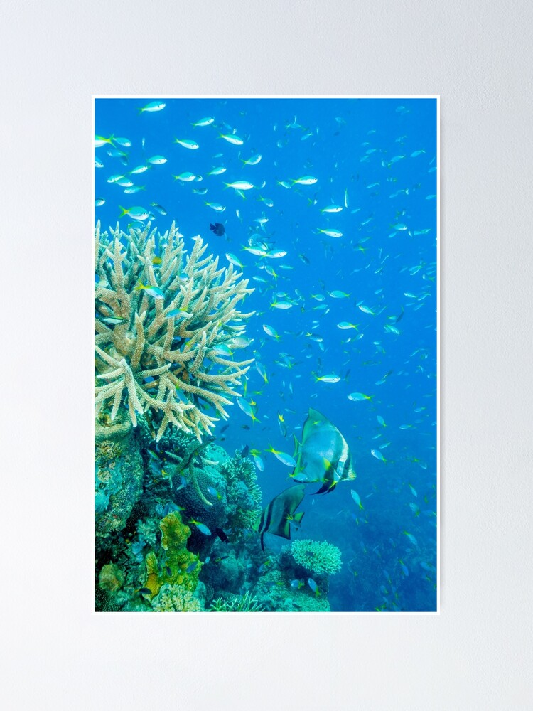 Alternate view of Reef scene Poster
