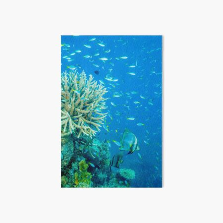 Reef scene Art Board Print