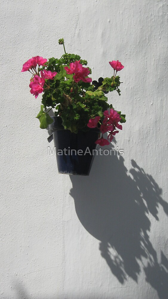 Flower pot by MatineAntonis