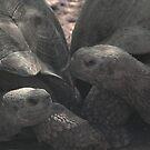 Giant tortoises by Trevor Needham