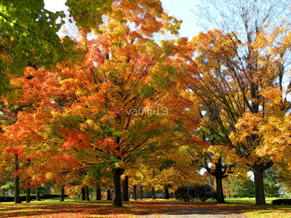Fall colors by vadim19