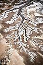 River Branches by Mieke Boynton
