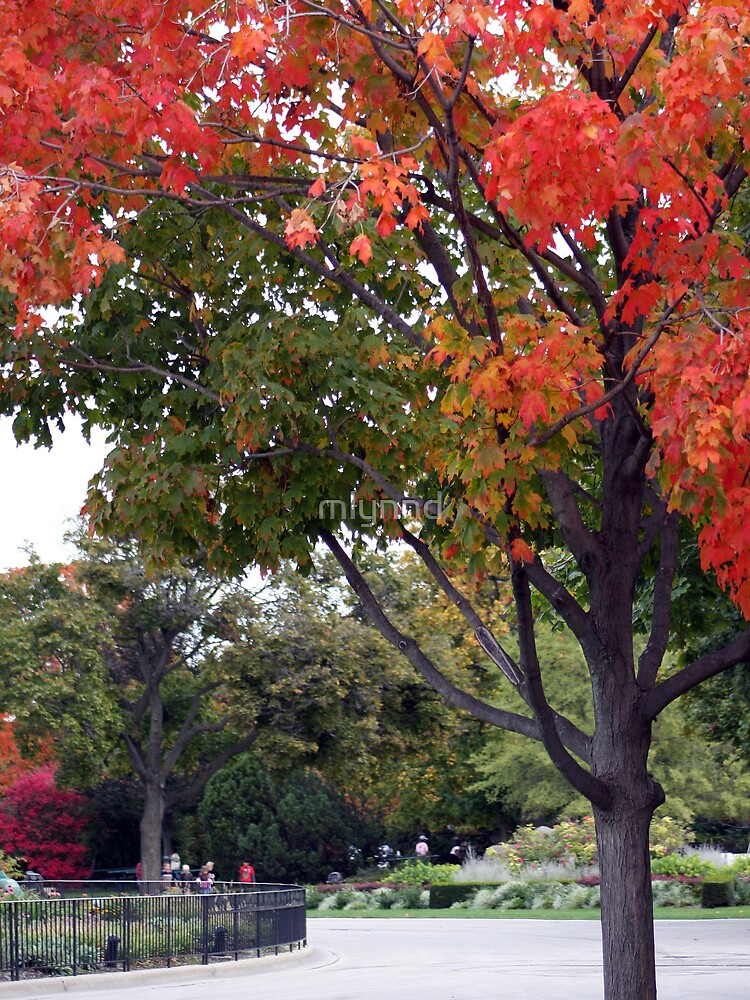 Fall Day At The Zoo by mlynnd