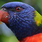 Extreme close-up Rainbow Lorikeet by lizdomett