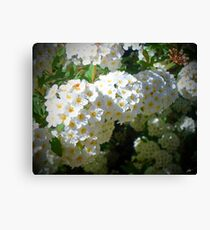 White Flowers in the Garden  Canvas Print