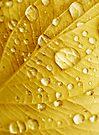 Raindrops by George Parapadakis (monocotylidono)