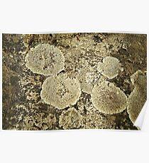 Lichen Patch Poster