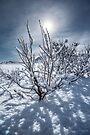 A Winter Wonderland by Mieke Boynton