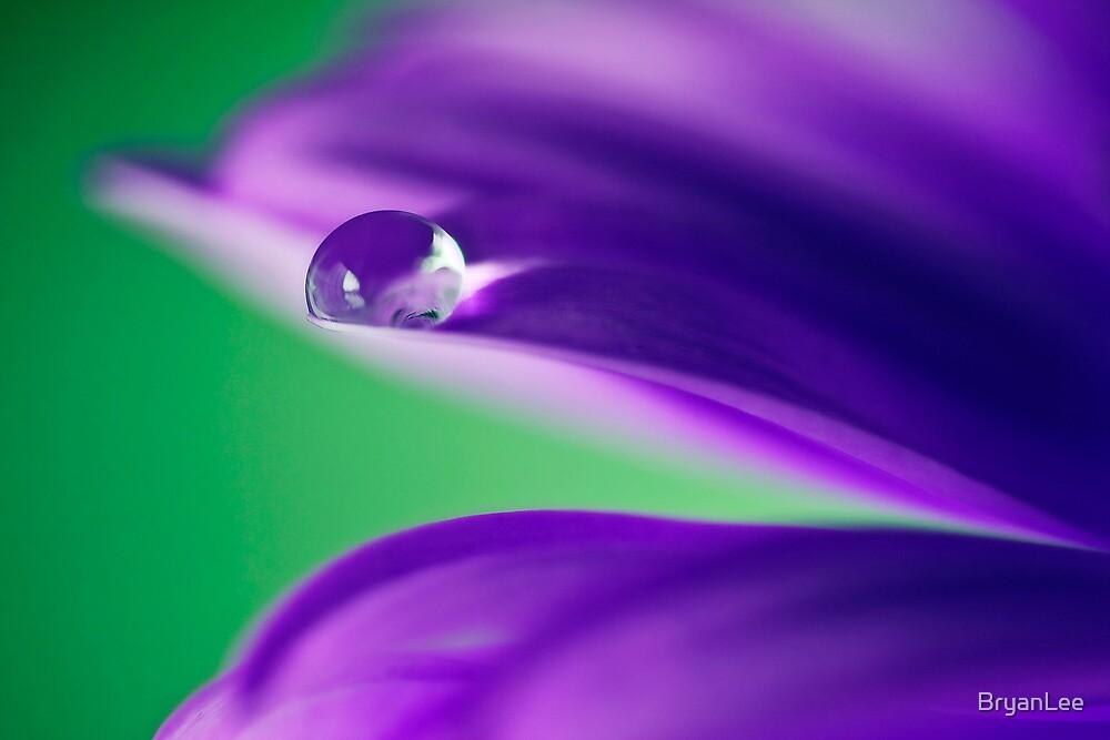 Raindrop by BryanLee