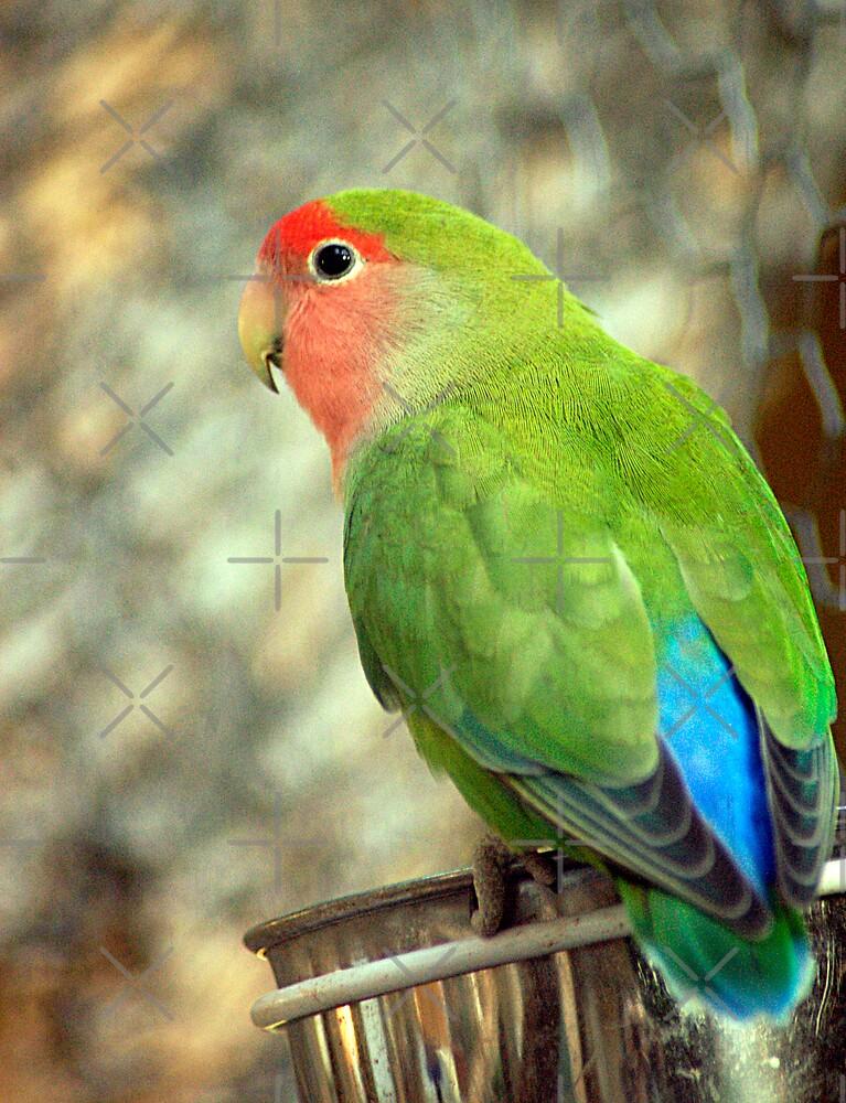 Love Bird by Clayton Bruster