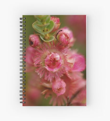 Verticordia Pink Spiral Notebook