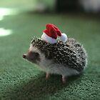 Cute Hedgehog by Matty723