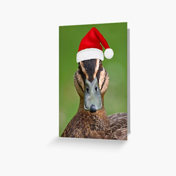 Christmas Duck Greeting Card
