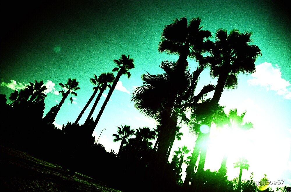 Tilted Palms by PeggySue67