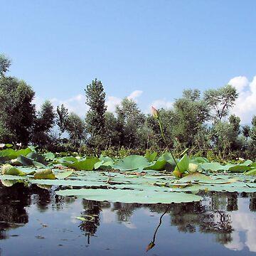 a lotus landscape by hezyakri