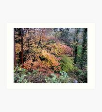 Golden Glory (Autumn at Dudmaston) Art Print