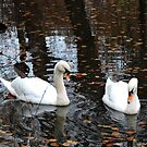 Dudmaston Swans (At Autumn) by CreativeEm