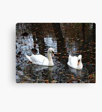 Dudmaston Swans (At Autumn) Canvas Print