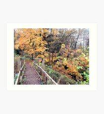 Walkway To Autumn (Dudmaston)  Art Print