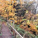 Walkway To Autumn (Dudmaston)  by CreativeEm
